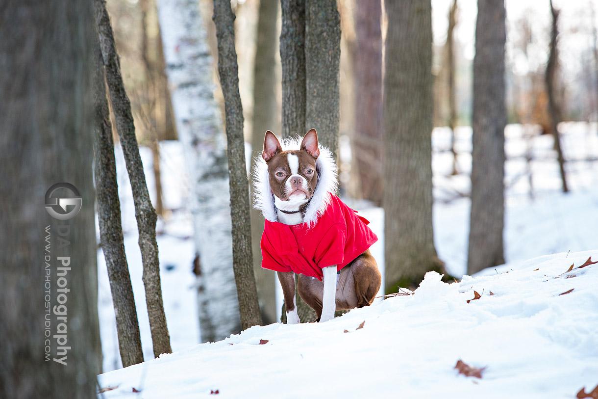 Winter Photos of a dog