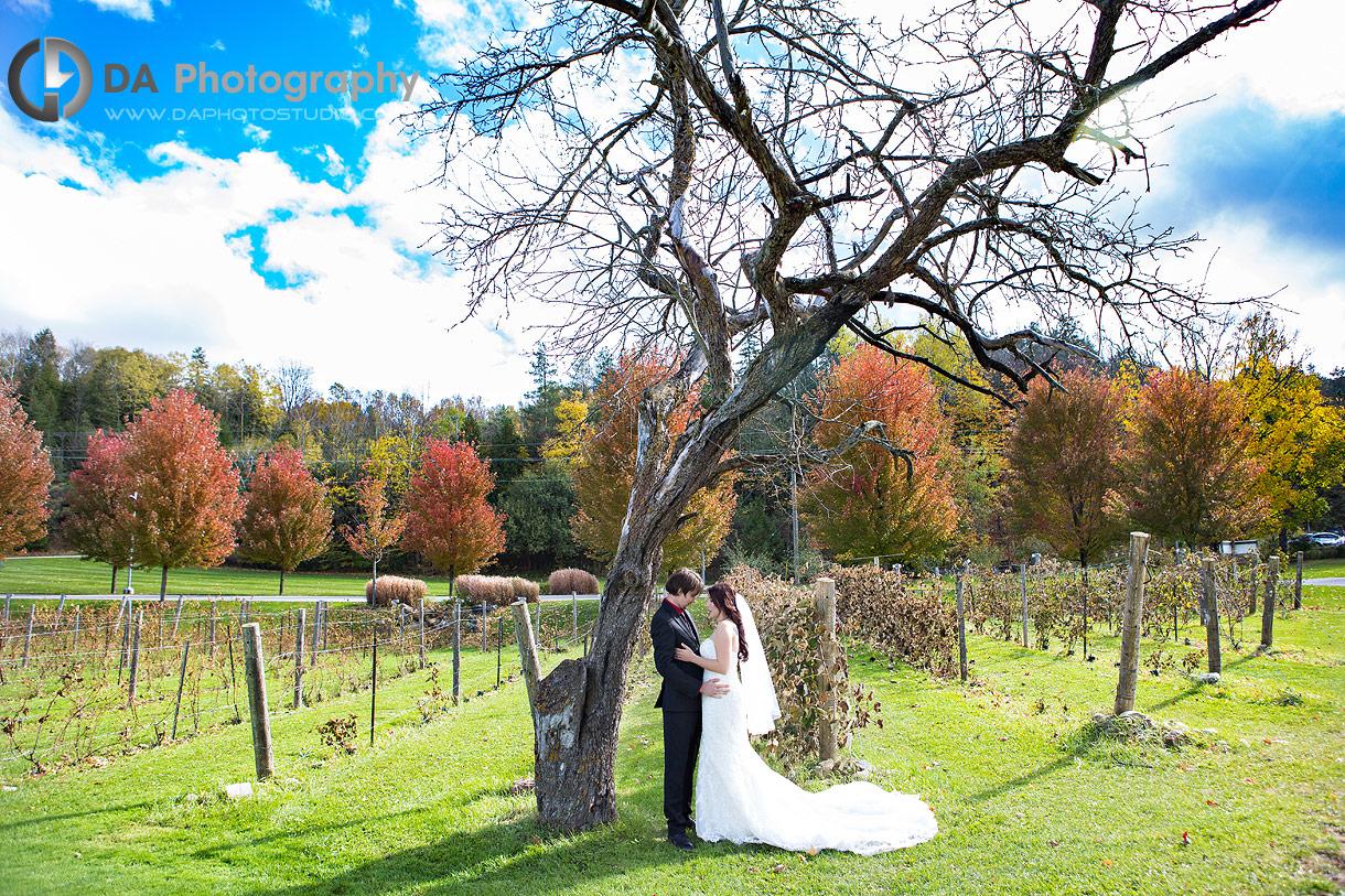 Hockley Valley Wedding Photo