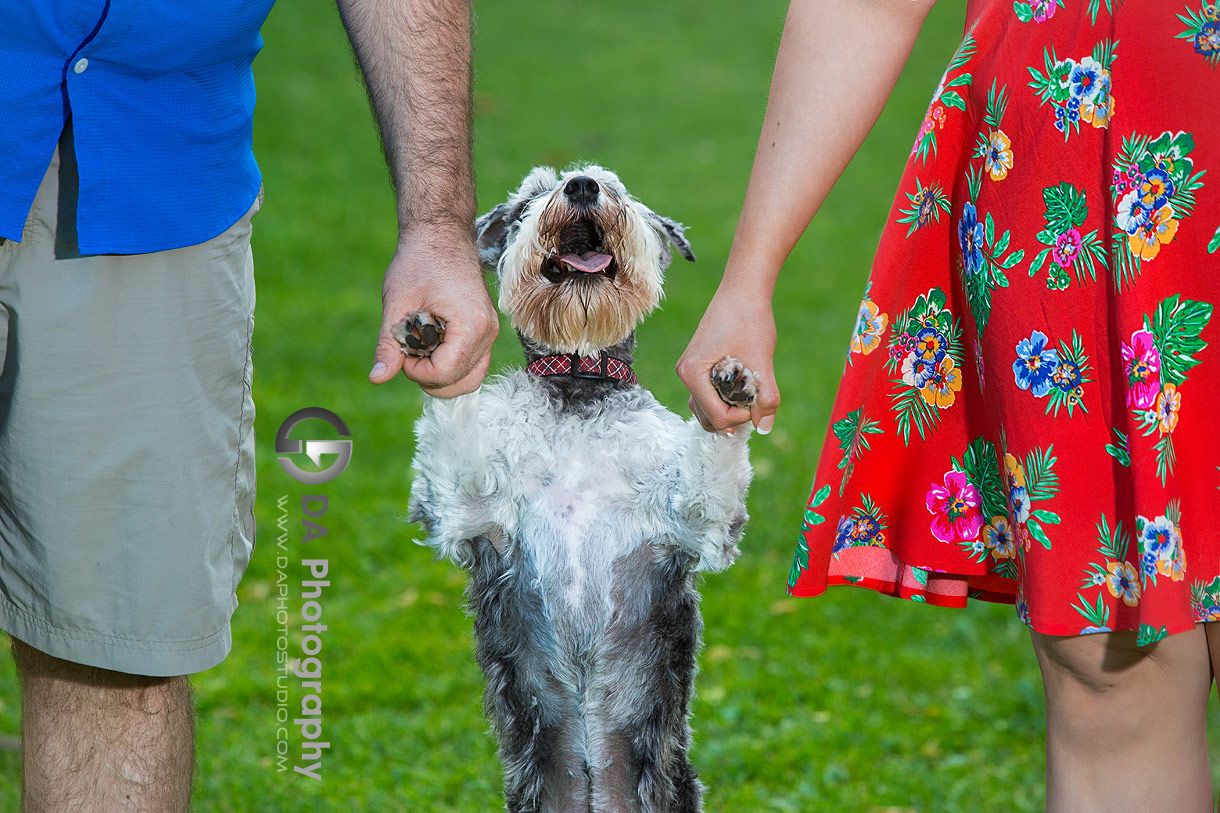 Engagement Photos at Happy Rolph's Animal Farm