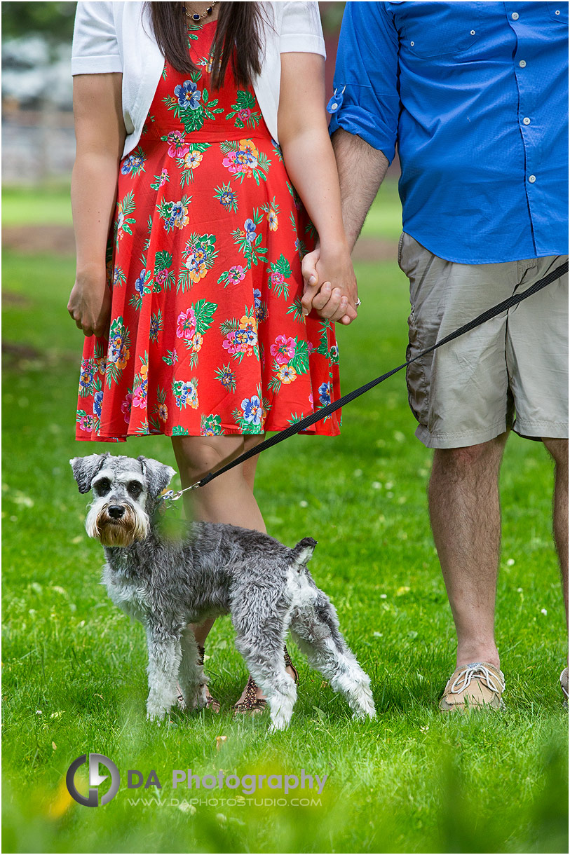 Engagement Photo at Happy Rolph's Animal Farm
