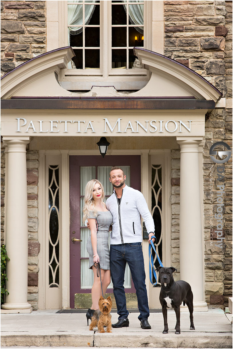 Relaxed engagement photos with dogs