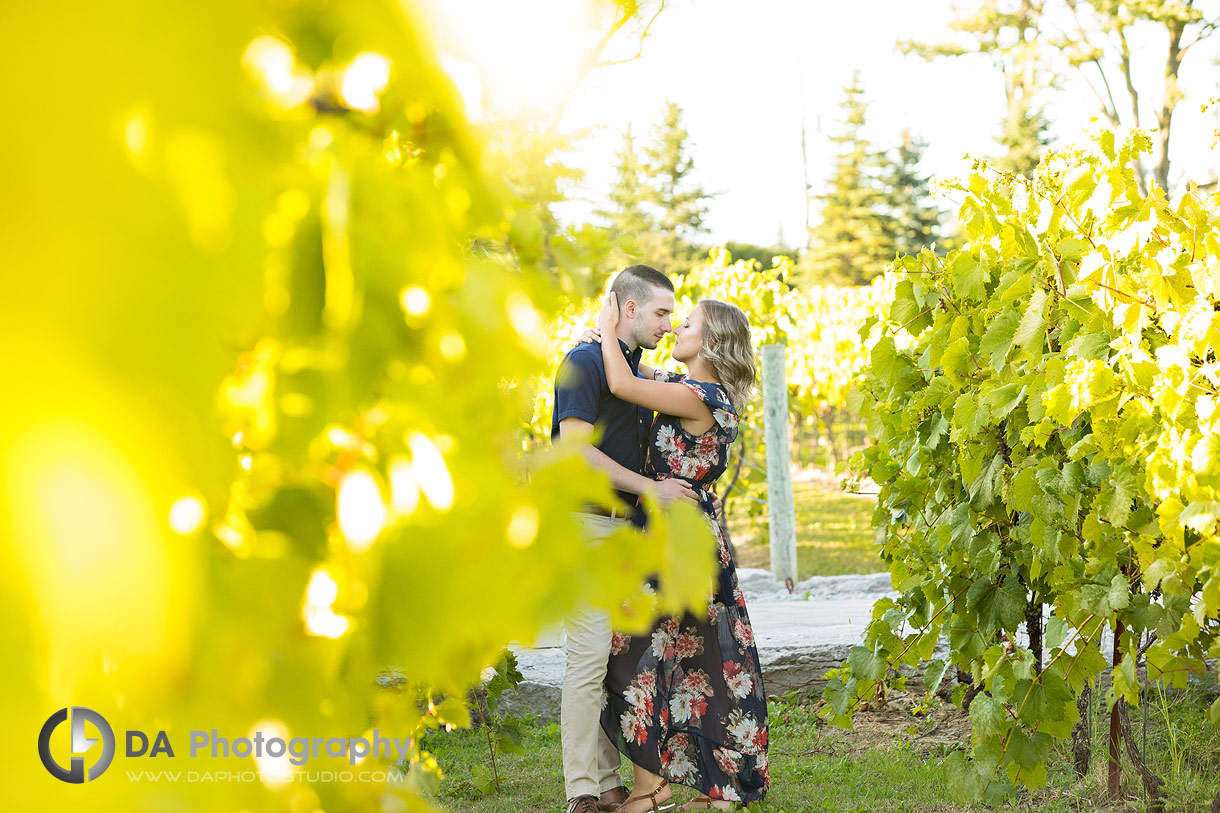 Engagement Photos at Gallucci Winery in Whitchurch-Stouffville