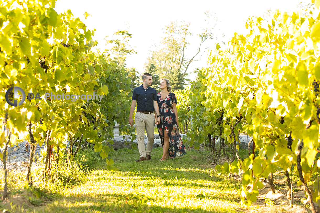 Gallucci Winery Photographs