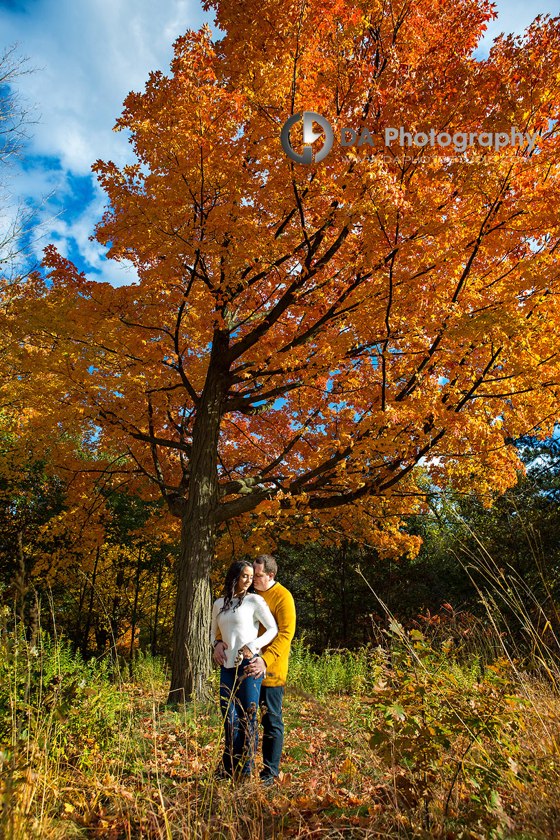 Toronto Engagement Pictures in fall
